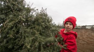 christmas-tree-recycling-december-0011