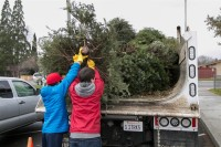 Christmas Tree Recycling December 0016