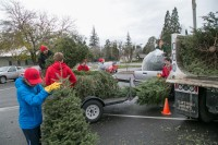 Christmas Tree Recycling December 0017