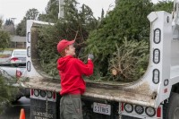 Christmas Tree Recycling December 0018