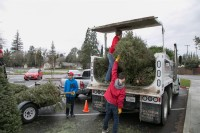 Christmas Tree Recycling December 0019