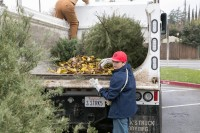 Christmas Tree Recycling December 0022