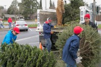 Christmas Tree Recycling December 0023