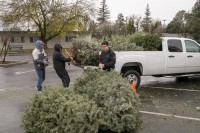 Christmas Tree Recycling December0025