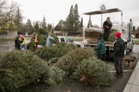 Christmas Tree Recycling December0031