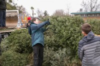 Christmas Tree Recycling December0034